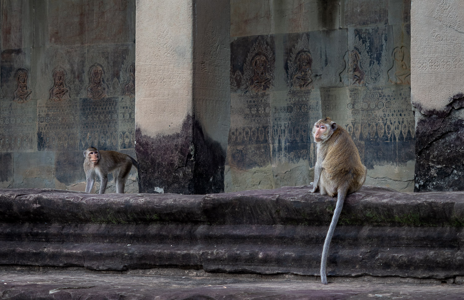 Monky business, Angkor Wat, Angkor, Cambodia.