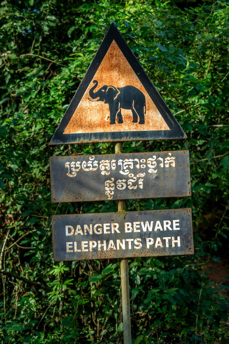 Road sign warning for elephants, Angkor, Cambodia.
