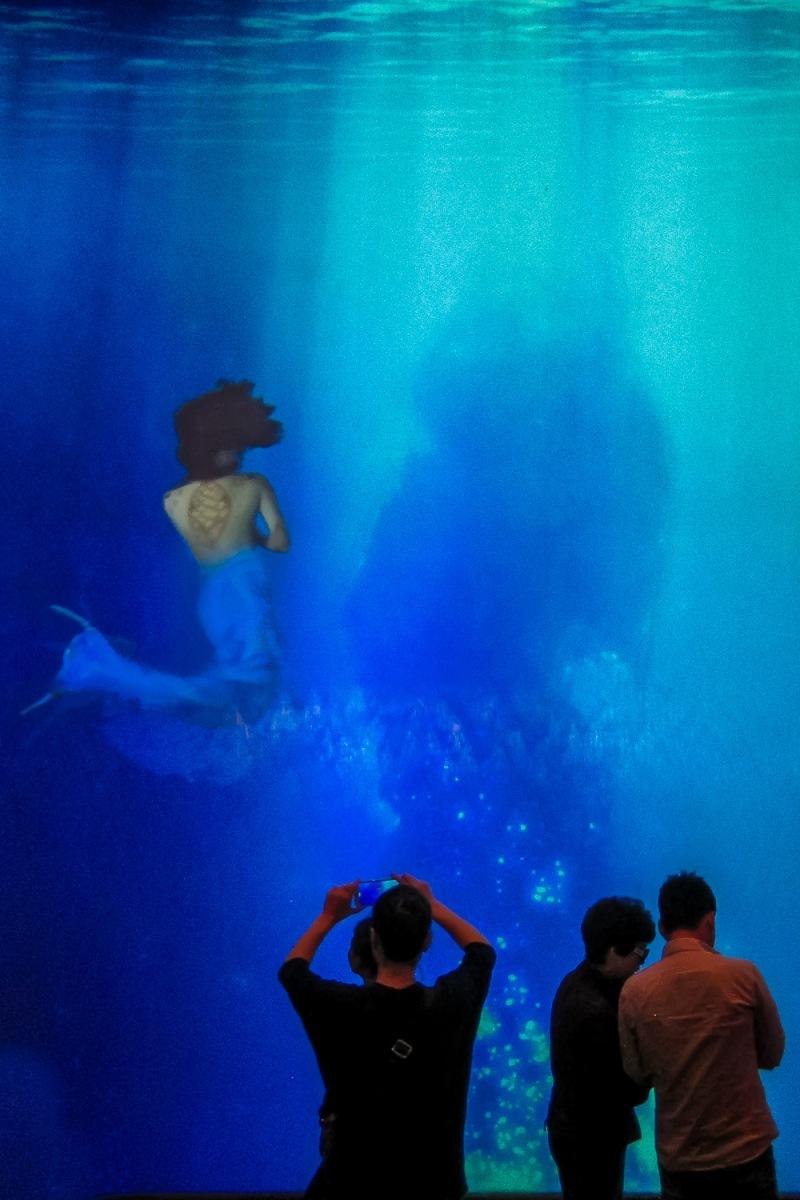 Mermaid swimming in an aquaria at MGM Grand, Macau, China.