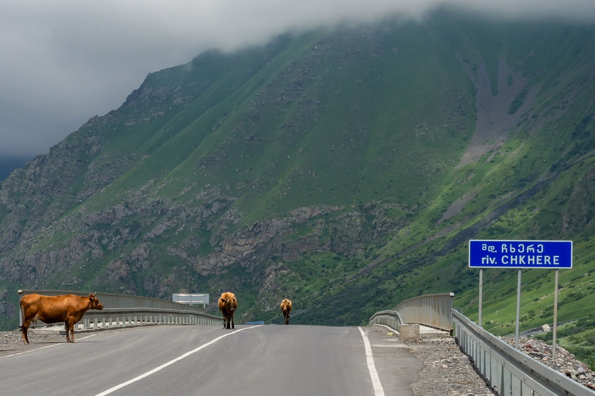 Cows on the highway, Chkere, Georgia.
