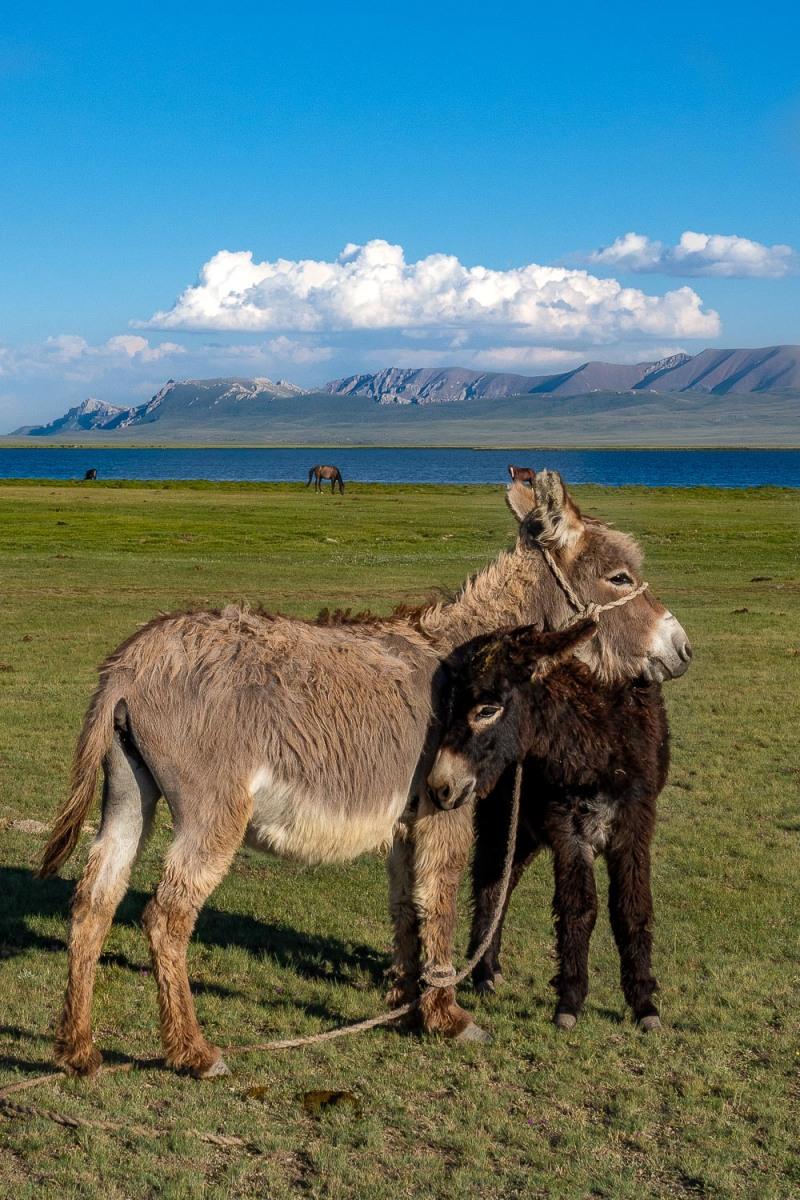 Song Kul-Lake, Kyrgyzstan.
