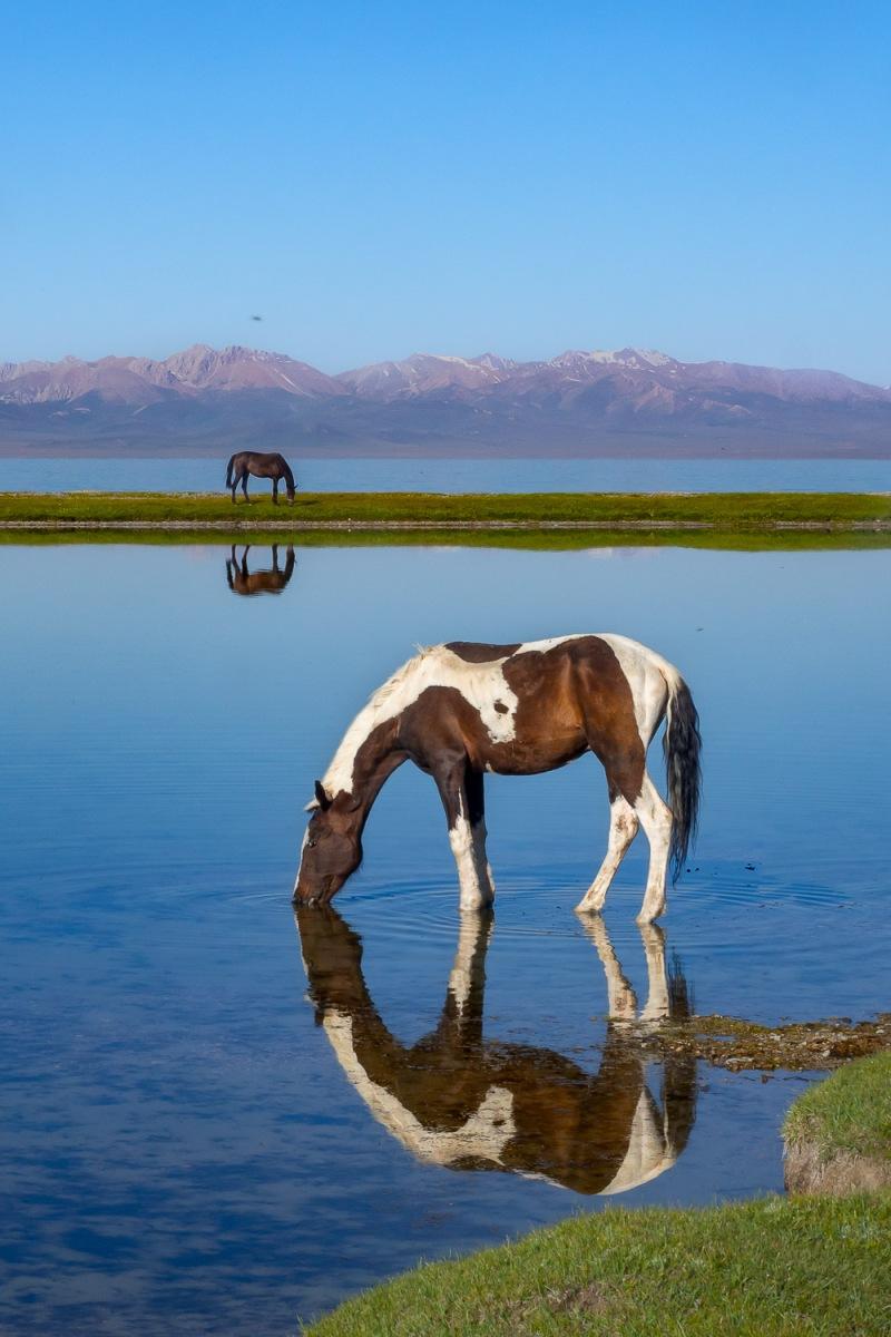 Two horses at Song-Kul Lake, Kyrgyzstan.