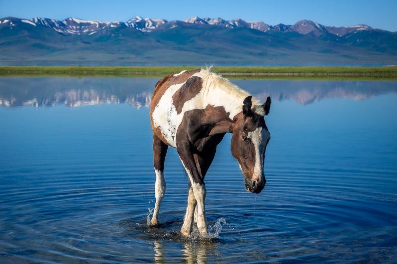 Horse at Song Kul-Lake, Kyrgyzstan.