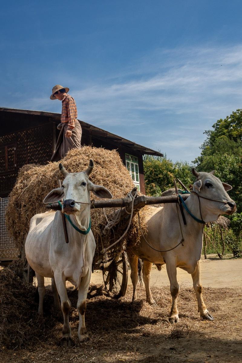 Lekkapin Village, Myanmar.