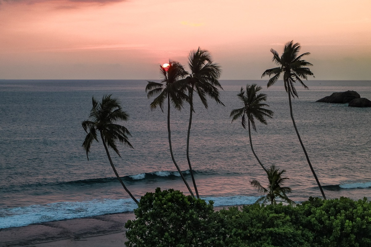 Palm trees hanging out over the sea, Weligama, Sri Lanka.