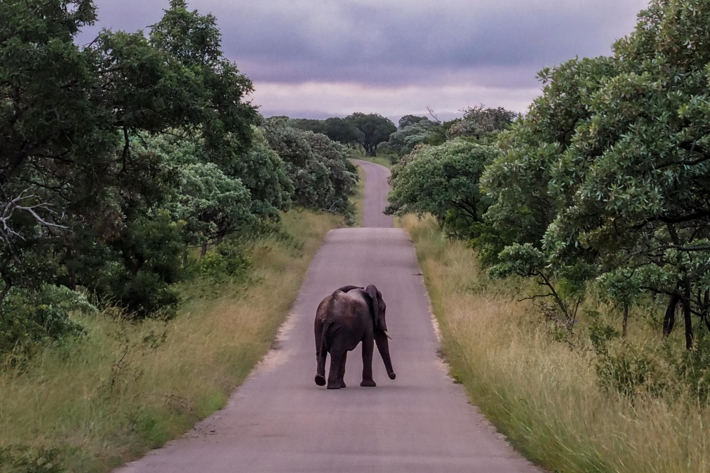 Travelgrapher.com-Inspire-Featured-Image-South-Africa-Kruger-Park-Safari-Elephant