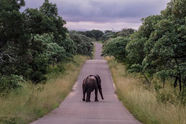 Travelgrapher.com-Inspire-Featured-Image-South-Africa-Kruger-Park-Safari-Elephant