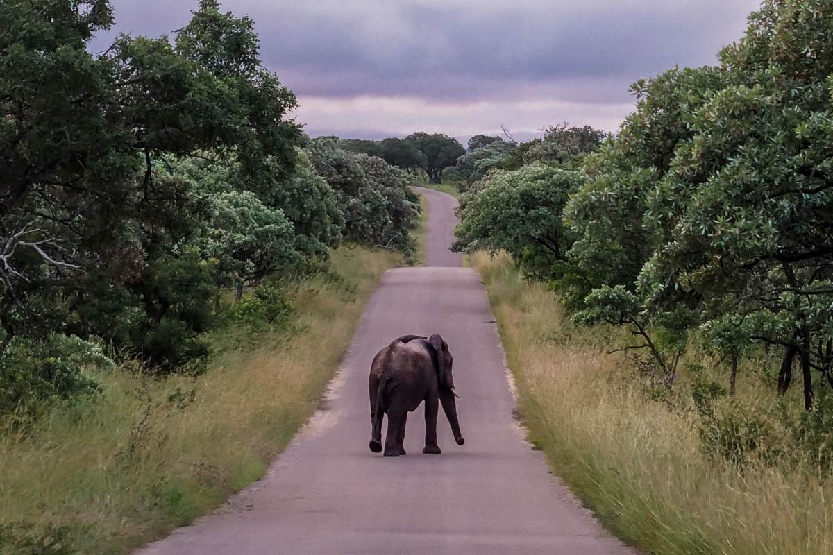Travelgrapher.com-Inspire-South-Africa-Kruger-Park-Safari-Elephant