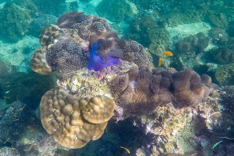 Travelgrapher.com-Inspire-Myanmar-Mergui-Corals